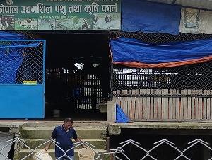 Nepal Udhamshil Pashu tatha Krishi Farm